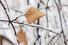 leaf_pic