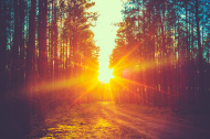 stock-photo-51226536-forest-road-sunset-sunbeams