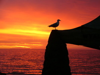 sunset-1547154