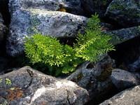 mountain-plant-1374363
