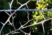 entanglement-1402305