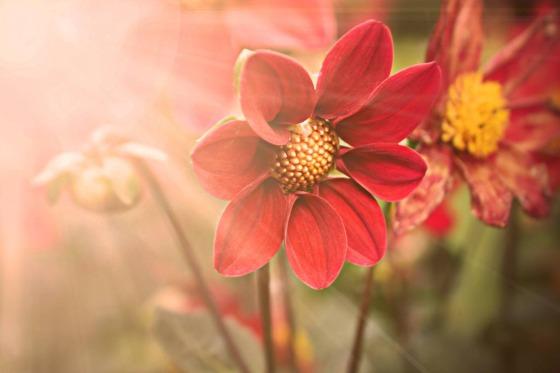 flower-2456134_1920